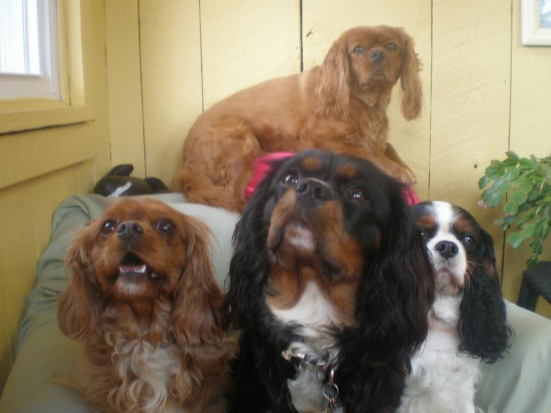 Four Dogs Looking Directly At The Camera
