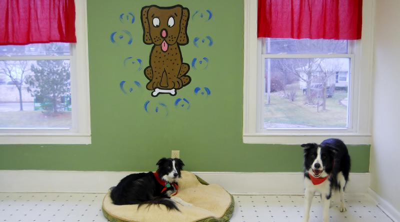 Two Dogs Relaxing at Pooch Palace